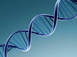 DNA 2008